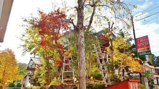 兼業農家の冬準備は庭木の剪定から・・・③_c0336902_20533654.jpg