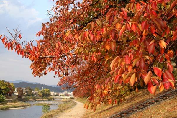 桜の色付きピーク_e0048413_20572450.jpg