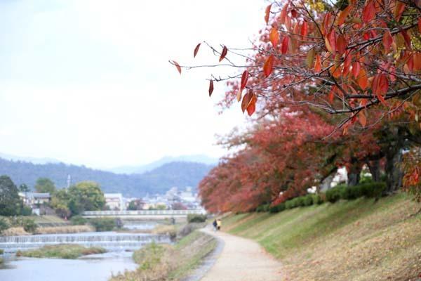 桜の色付きピーク_e0048413_20572830.jpg