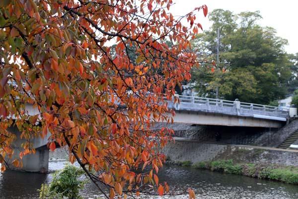 桜の色付きピーク_e0048413_20573583.jpg