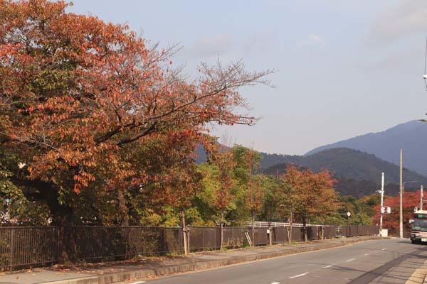 桜の色付きピーク_e0048413_20573849.jpg