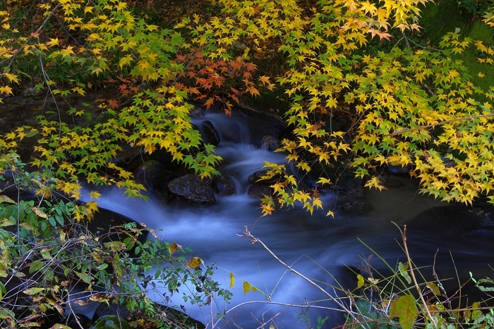 渓流と紅葉_c0047422_18414802.jpg