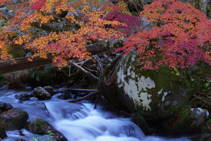 渓流と紅葉_c0047422_18420401.jpg