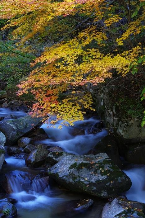 渓流と紅葉_c0047422_18422339.jpg