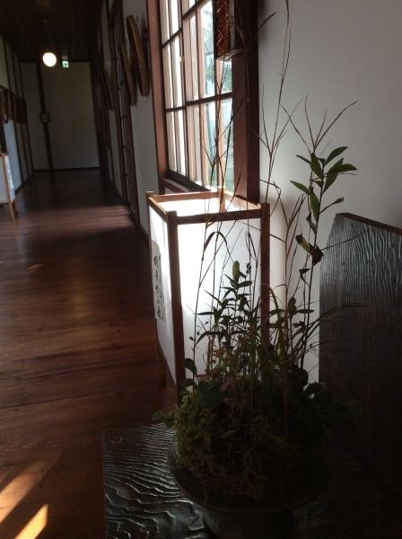 「芭蕉の館」と盆栽_f0289632_10473045.jpg