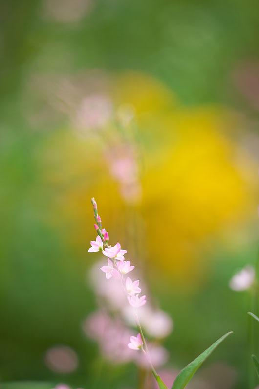 秋の野草たち 2_c0067040_20501237.jpg