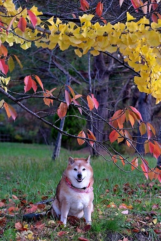 行く秋を惜しむ_b0314043_07492014.jpg