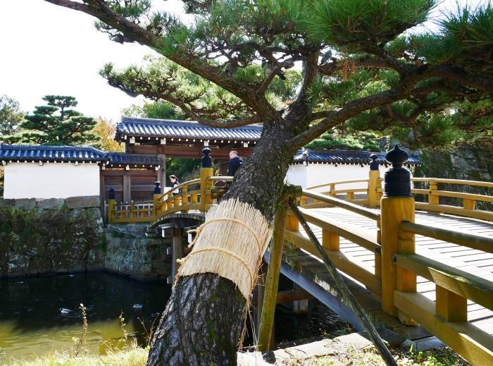 和歌山城のこも巻き  2020-01-25 00:00  _b0093754_13354987.jpg