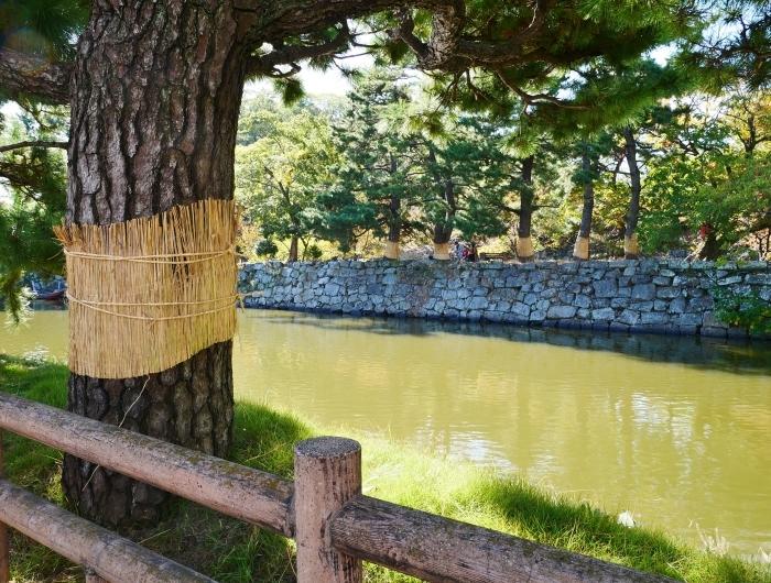 和歌山城のこも巻き  2020-01-25 00:00  _b0093754_13363208.jpg