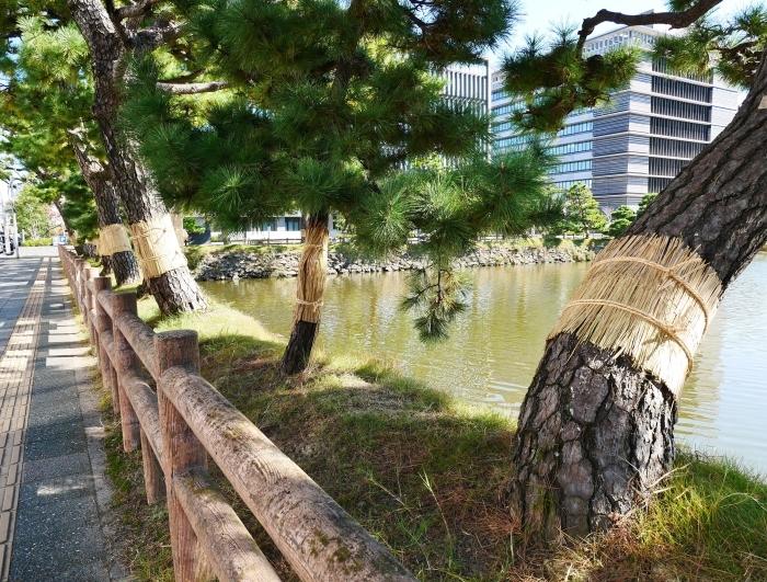 和歌山城のこも巻き  2020-01-25 00:00  _b0093754_13364191.jpg