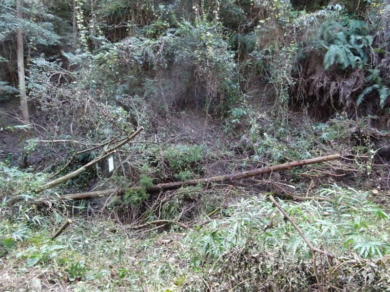台風被害処理が続く・・・孝子の森_c0108460_16554358.jpg