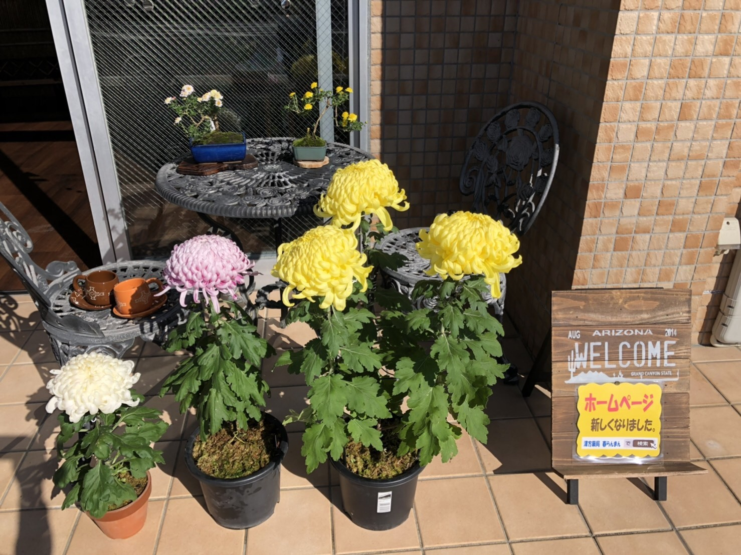 菊展覧会_b0328361_22064155.jpg