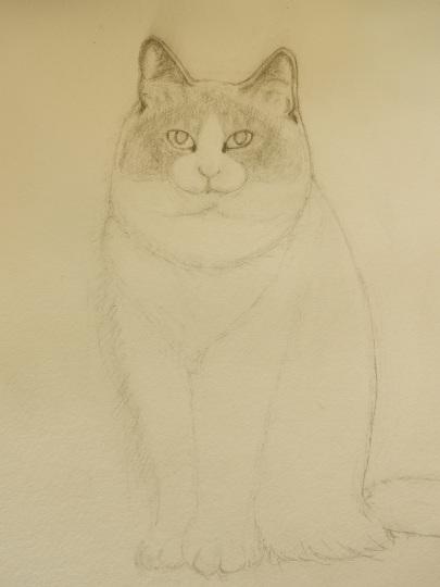 '19,11,12(火)猫の小雪ちゃんのデッサン!_f0060461_09501777.jpg