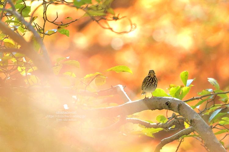 秋色の中_c0319774_21222893.jpg
