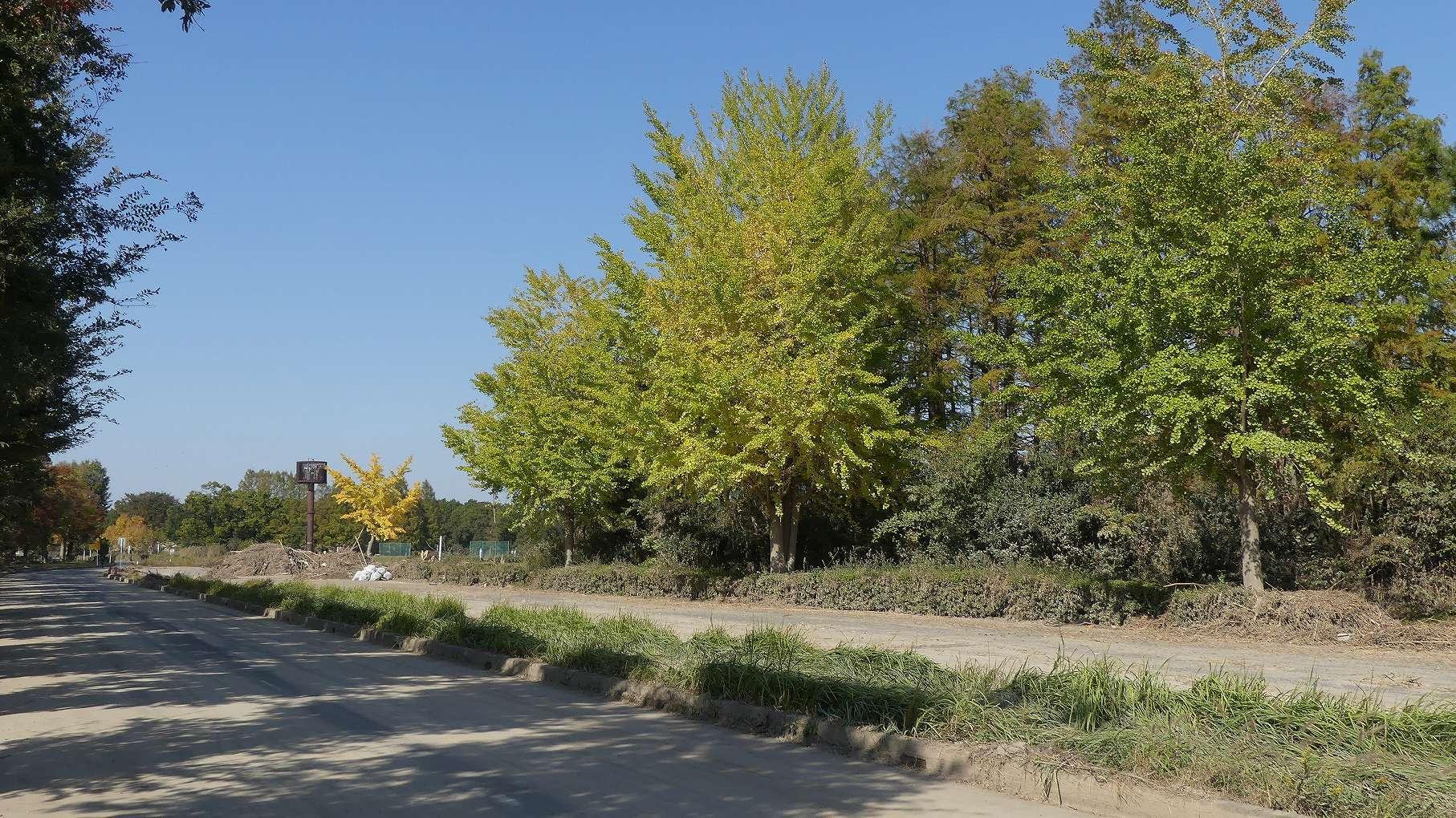秋ヶ瀬公園ふたりぼっち 【 2019 11/9(土) 】_a0185081_10395401.jpg