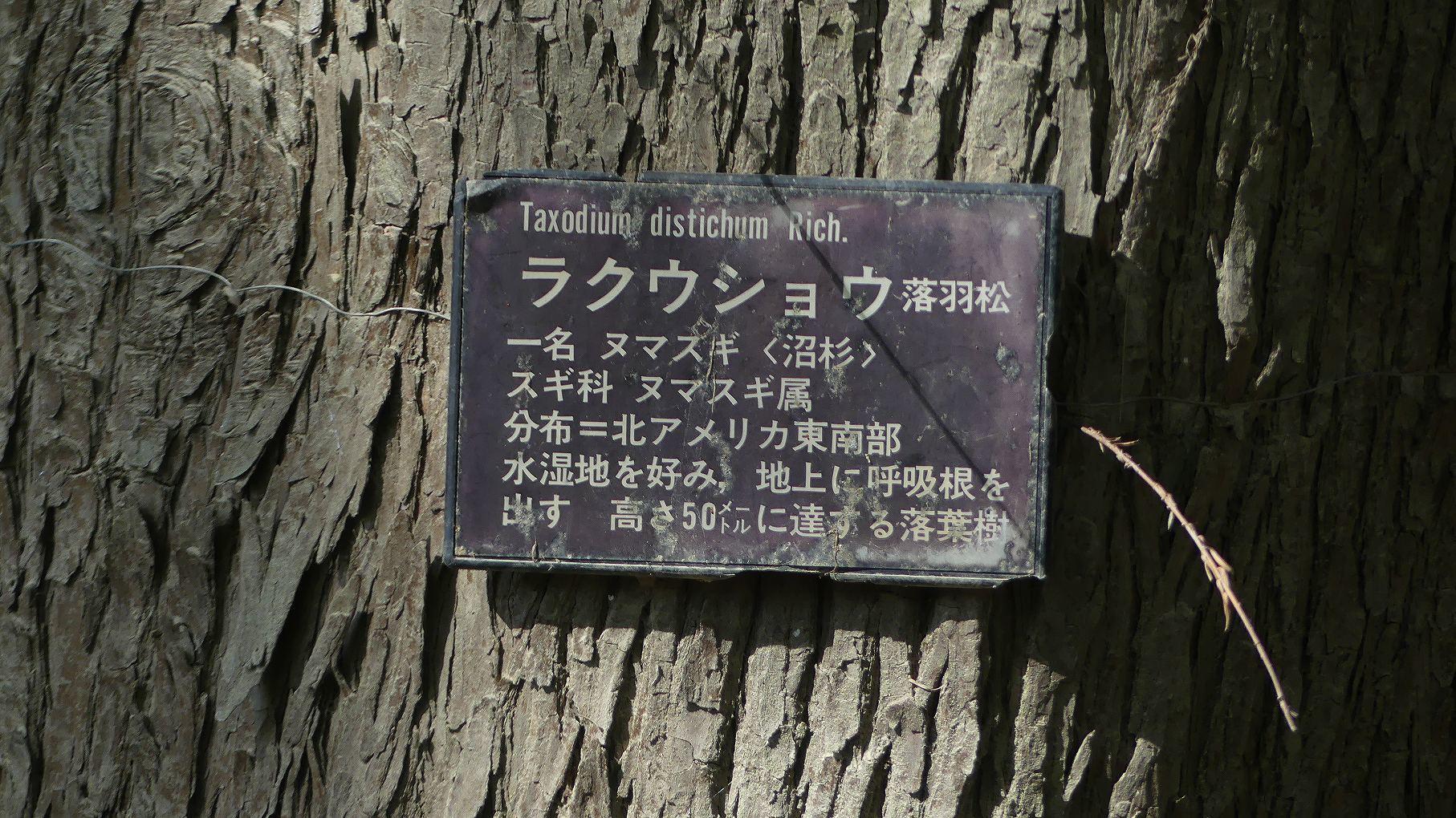 秋ヶ瀬公園ふたりぼっち 【 2019 11/9(土) 】_a0185081_15191230.jpg