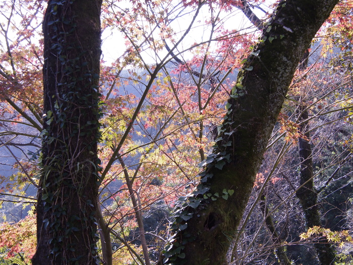 里山の紅葉_a0149488_14302371.jpg