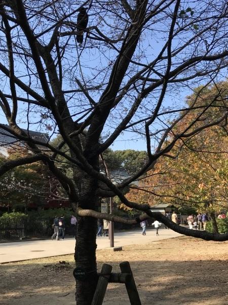 西洋美術館前庭の彫刻と駅からの近道エレベーター_e0397389_10544057.jpeg
