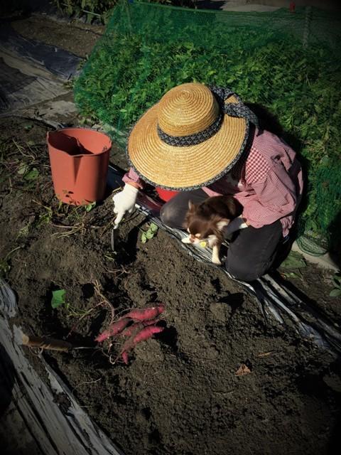 秋の収穫_f0229190_19392029.jpg