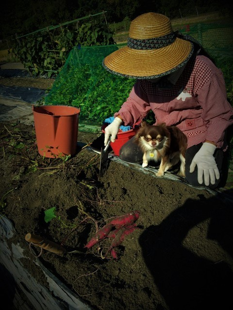 秋の収穫_f0229190_19400873.jpg