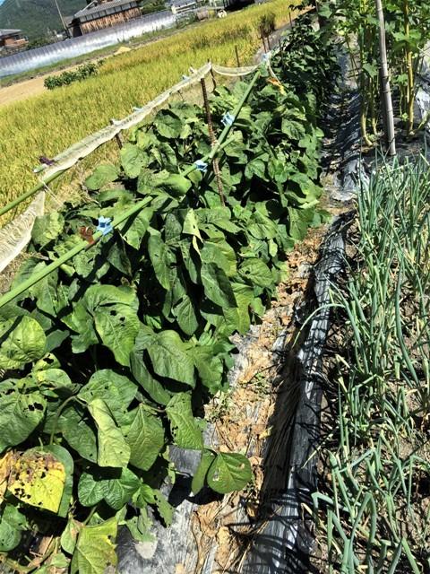 秋の収穫_f0229190_19413788.jpg