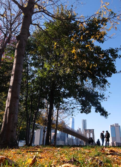 ニューヨークの紅葉とブルックリン・ブリッジ_b0007805_10073248.jpg