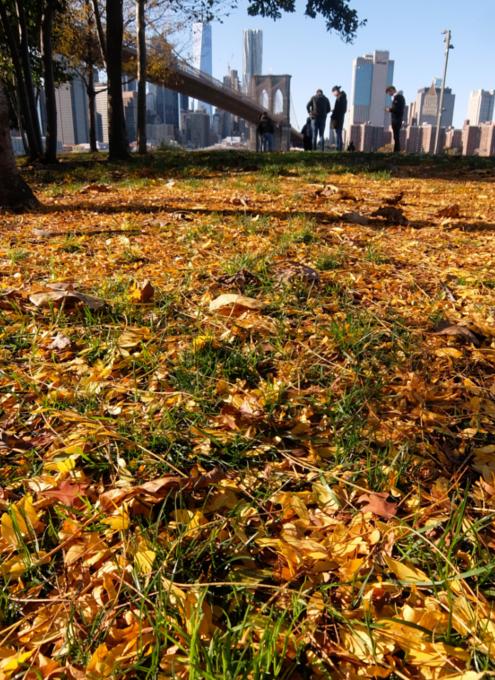 ニューヨークの紅葉とブルックリン・ブリッジ_b0007805_10083256.jpg