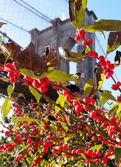 ニューヨークの紅葉とブルックリン・ブリッジ_b0007805_10144174.jpg