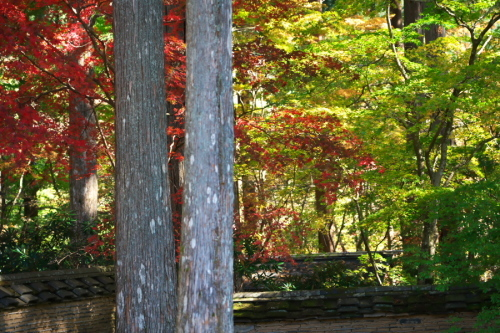古峰神社の紅葉2_a0263109_15052710.jpg
