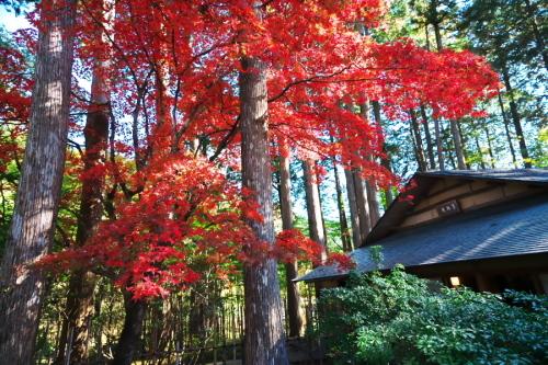 古峰神社の紅葉2_a0263109_15060631.jpg