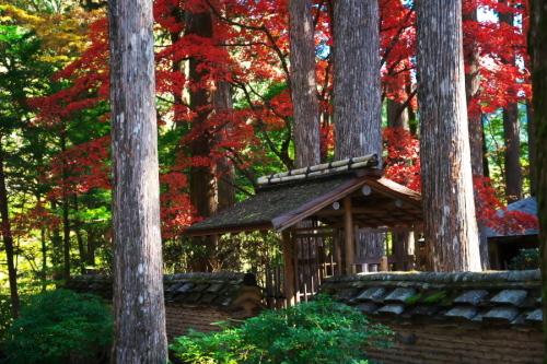 古峰神社の紅葉2_a0263109_15060661.jpg