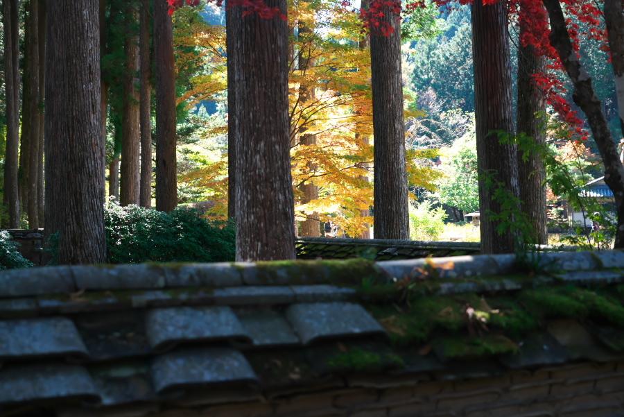 古峰神社の紅葉2_a0263109_15060674.jpg