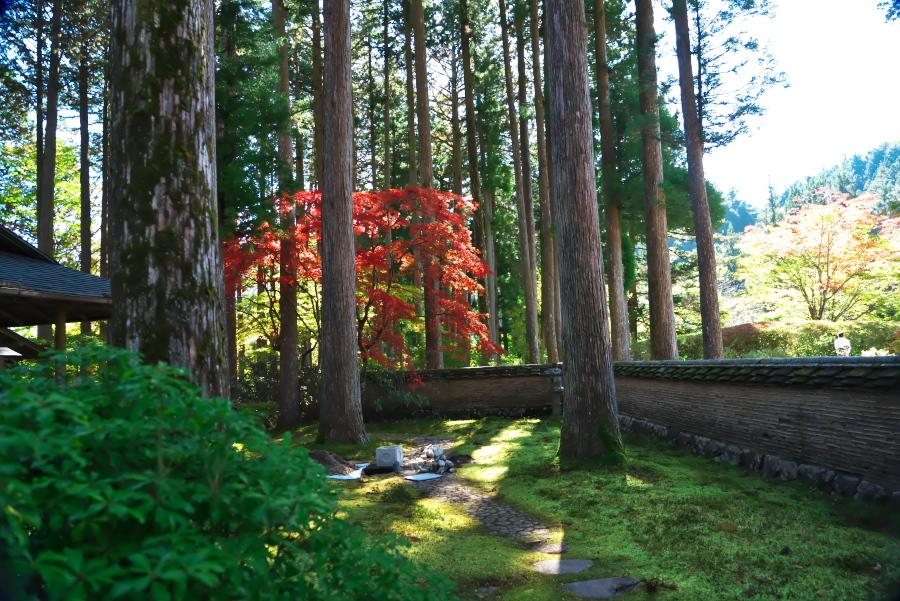 古峰神社の紅葉2_a0263109_15060679.jpg
