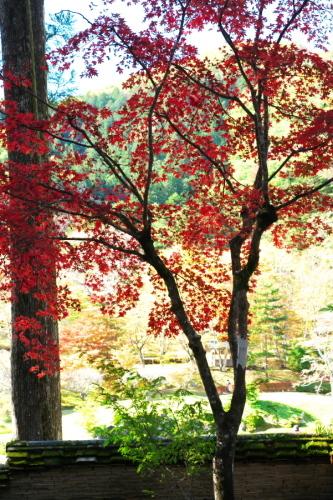 古峰神社の紅葉2_a0263109_15060753.jpg