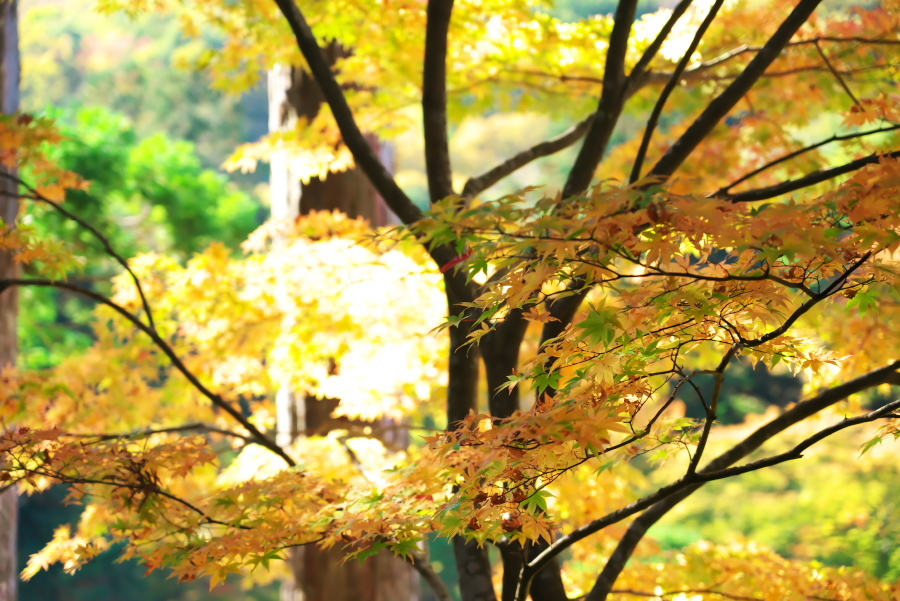 古峰神社の紅葉2_a0263109_15060767.jpg