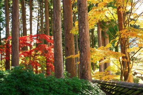 古峰神社の紅葉2_a0263109_15060778.jpg