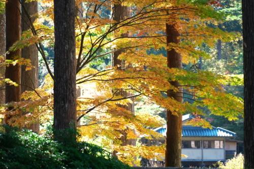 古峰神社の紅葉2_a0263109_15060791.jpg