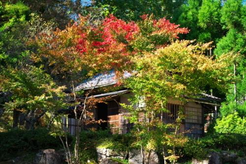 古峰神社の紅葉2_a0263109_15064524.jpg