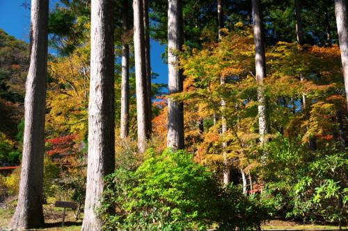 古峰神社の紅葉2_a0263109_15064646.jpg