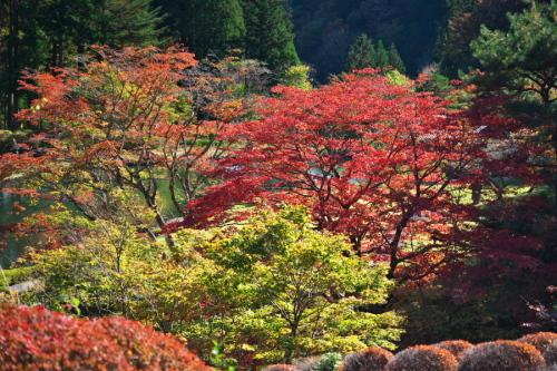 古峰神社の紅葉2_a0263109_15064730.jpg