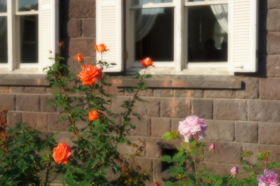 旧古河庭園の薔薇1_a0263109_18345934.jpg