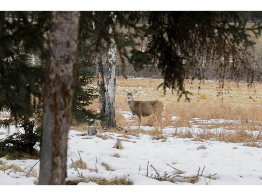 ホワイトホースの初冬大満喫、6泊7日イン・オンザレイクで親子オーロラの旅_d0112928_08362749.jpg