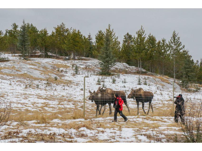 ホワイトホースの初冬大満喫、6泊7日イン・オンザレイクで親子オーロラの旅_d0112928_08363365.jpg