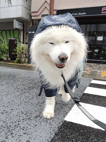 散歩屋日誌【22】_c0062832_16044705.jpg