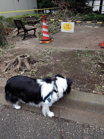 散歩屋日誌【22】_c0062832_16061628.jpg
