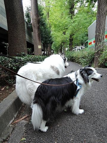 散歩屋日誌【22】_c0062832_16061661.jpg