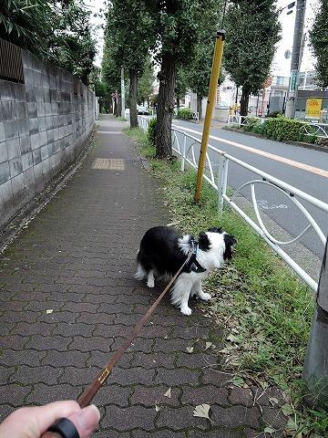 散歩屋日誌【22】_c0062832_16061670.jpg