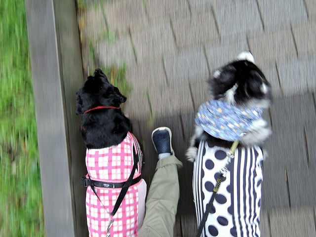 散歩屋日誌【22】_c0062832_16065721.jpg