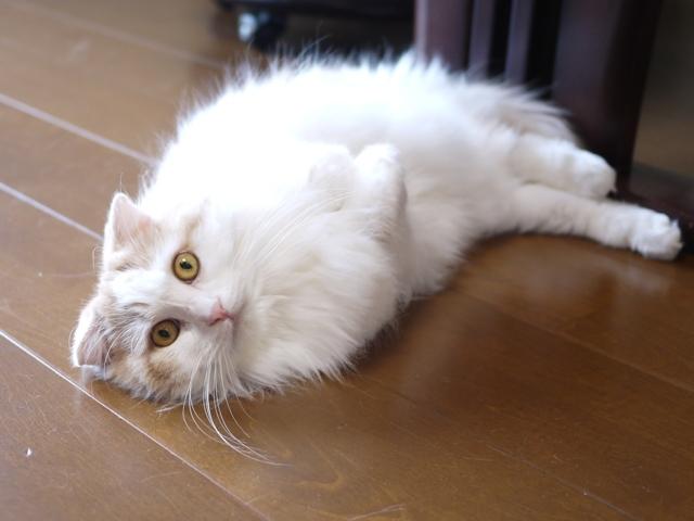 猫のお留守番 空くん編。_a0143140_21383556.jpg