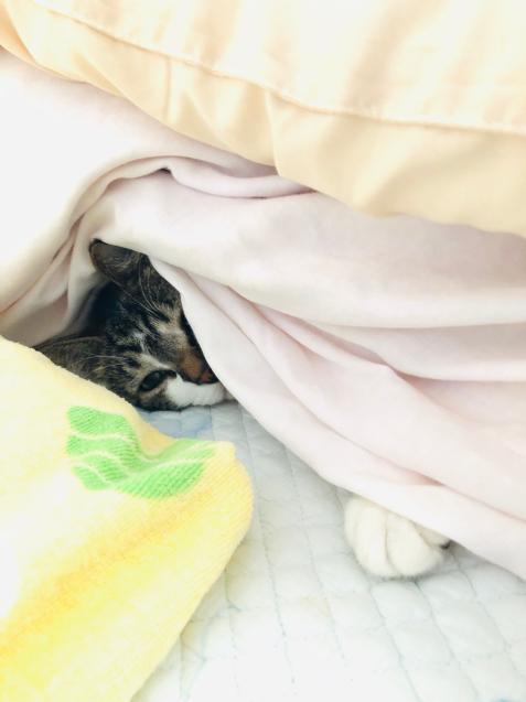今朝の気温は? 猫でわかる_e0379544_10240446.jpg